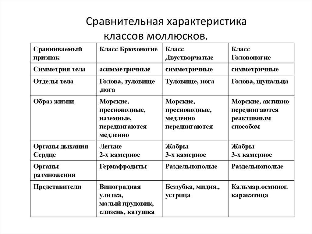 таблица характеристика многощетинковых червей