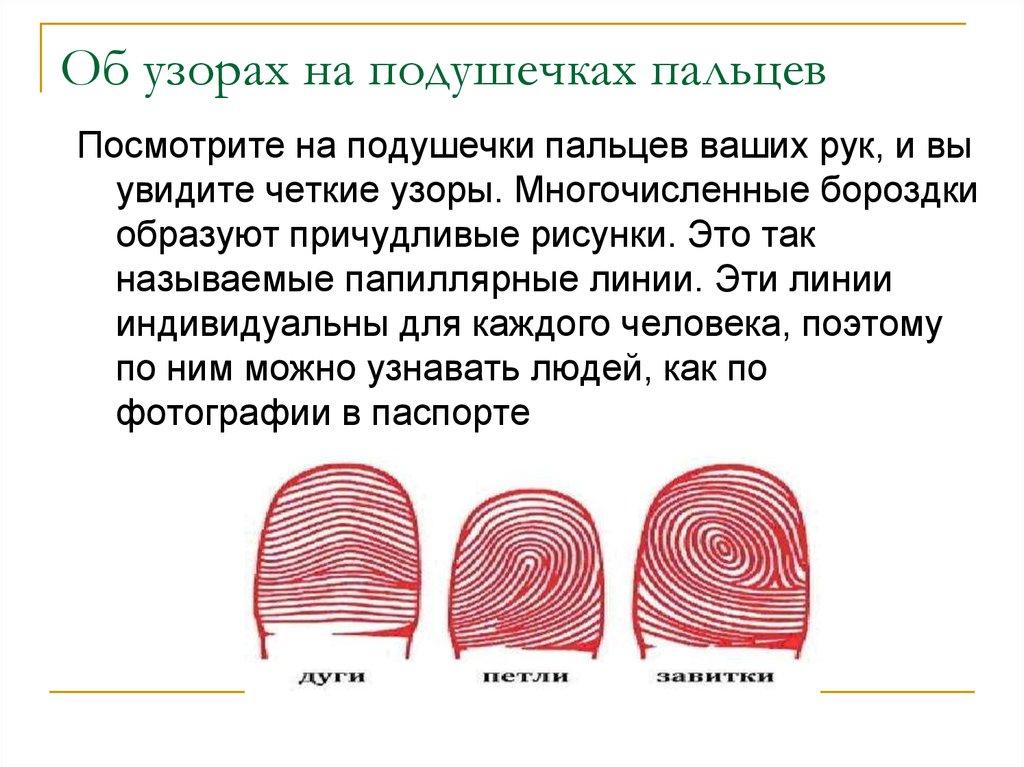 Папиллярные узоры на пальцах