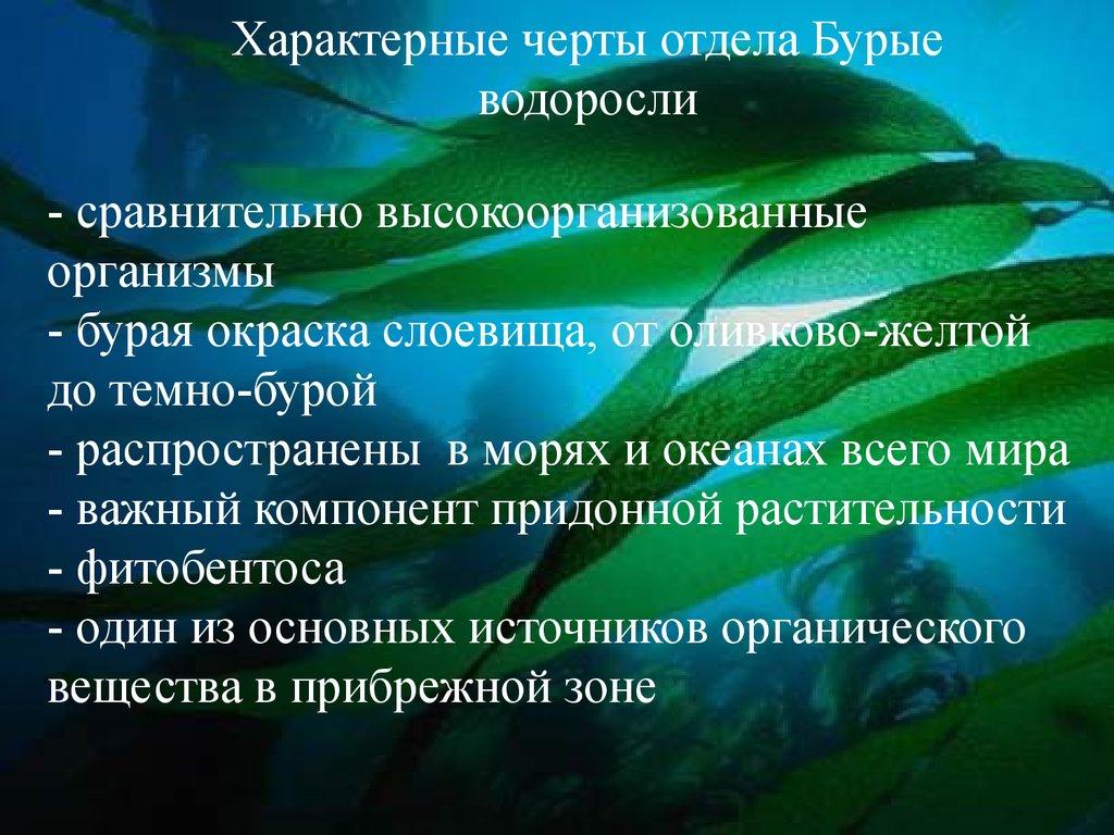 Радиоактивное загрязнение Ленинградской области Экология