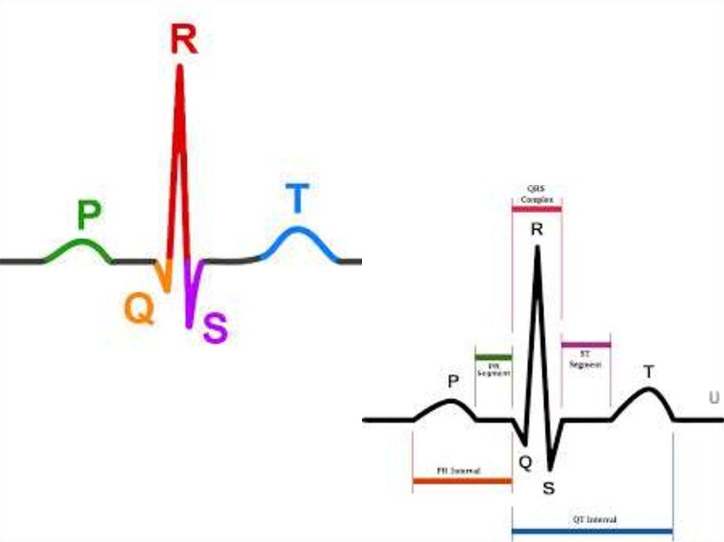 Методы исследования электрической активности сердца