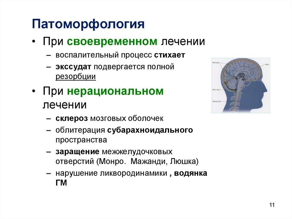 Экстерорецептор