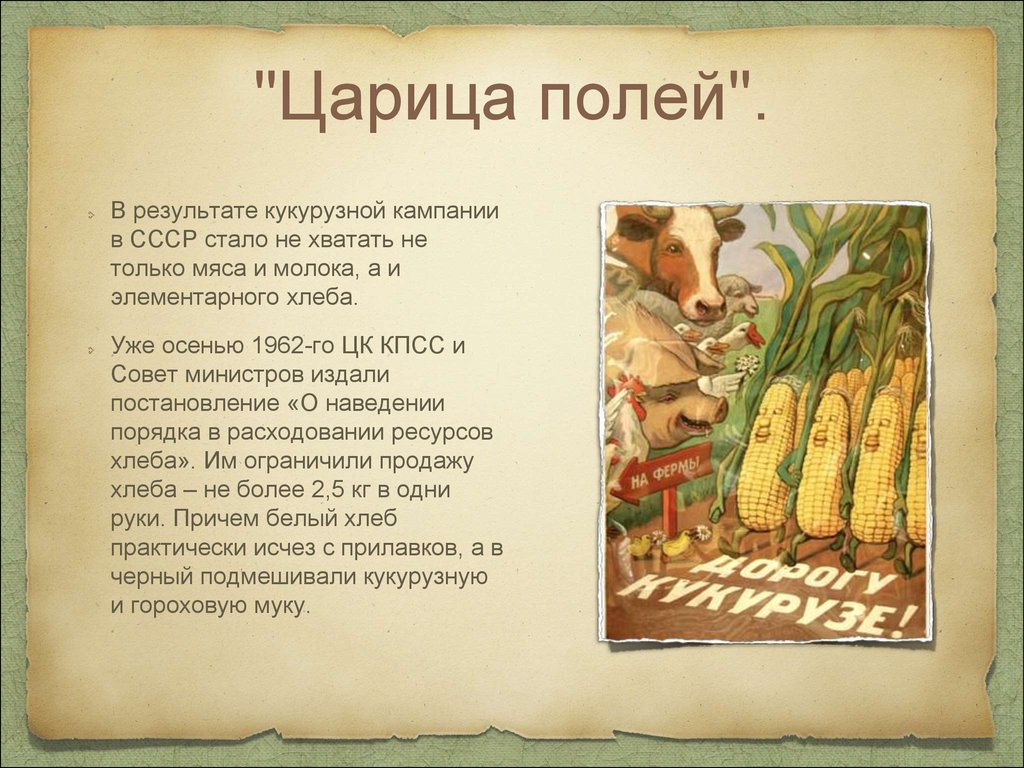 Совет 1 почему кукурузу называют царица полей