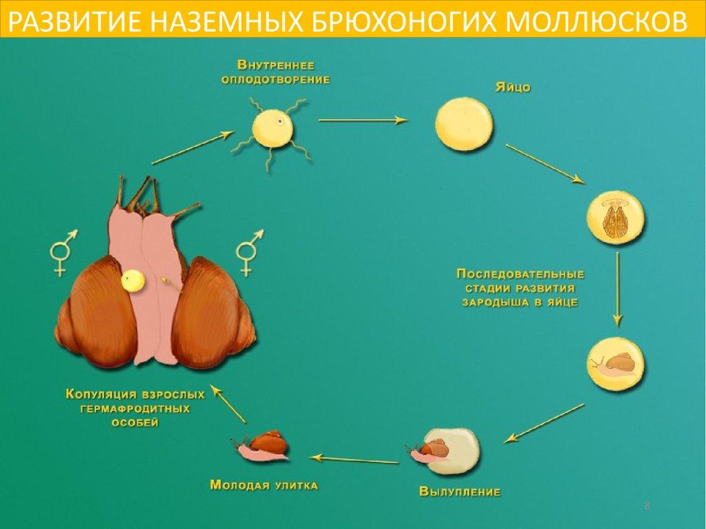 средство от паразитов в организме человека отзывы