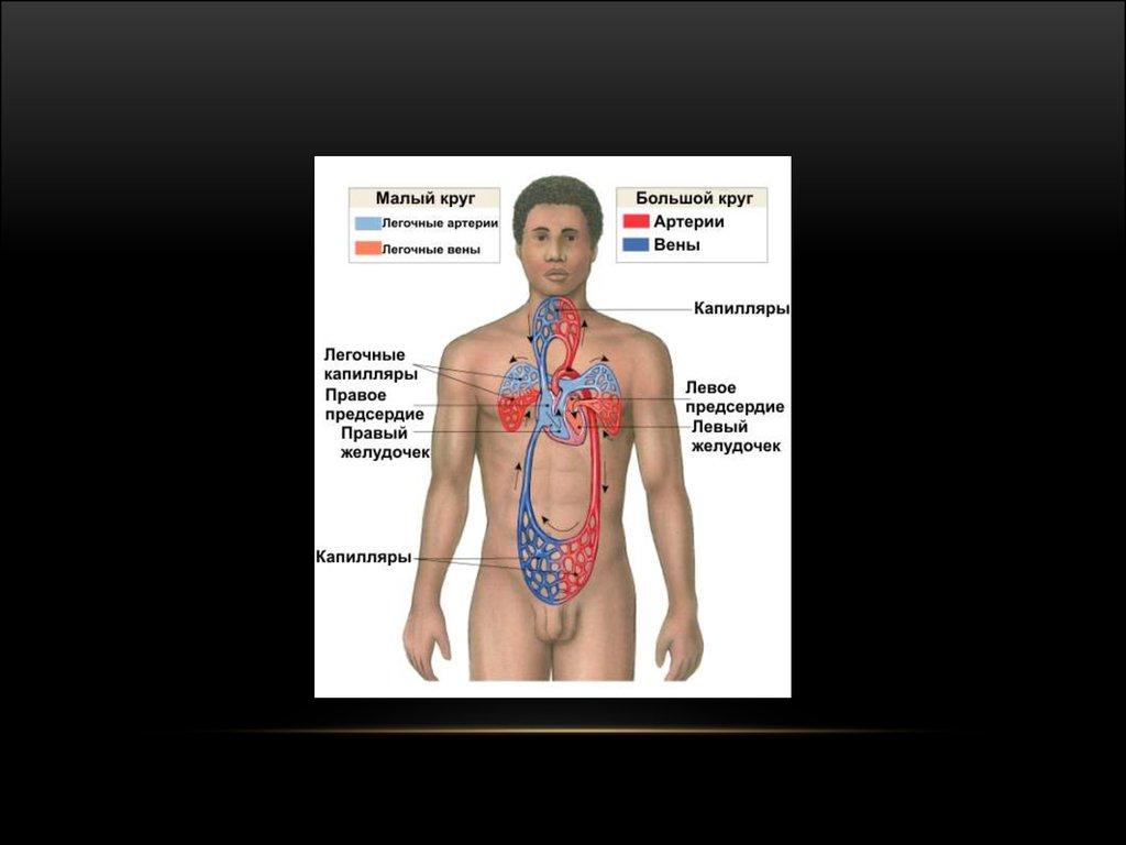 патогенез клинические примеры диагностика атопической аллергии