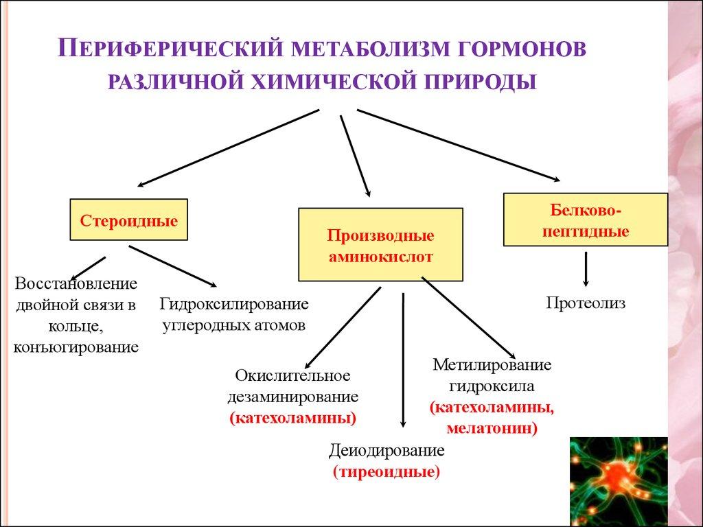 статины лекарственные средства