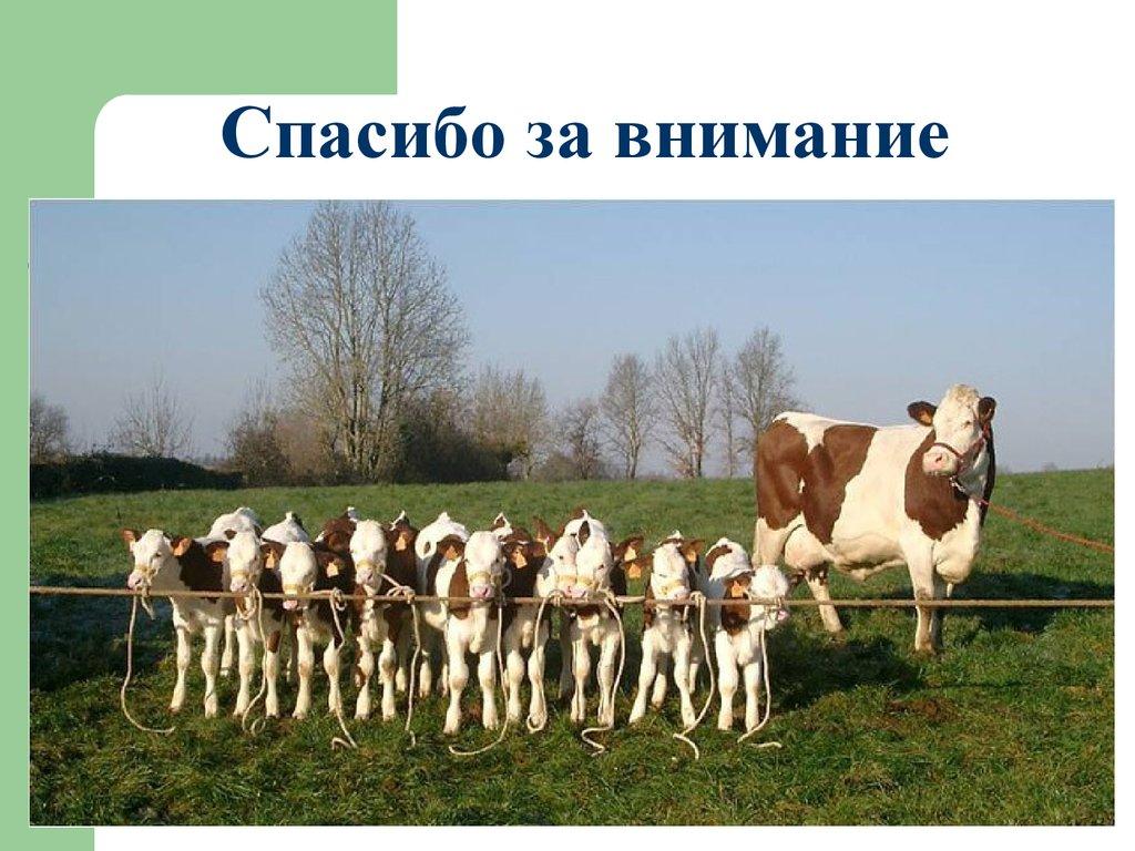 Дипломная работа на тему молоко и молочная продукция Расчет газопроводов Дипломная работа на тему молоко и молочная продукция