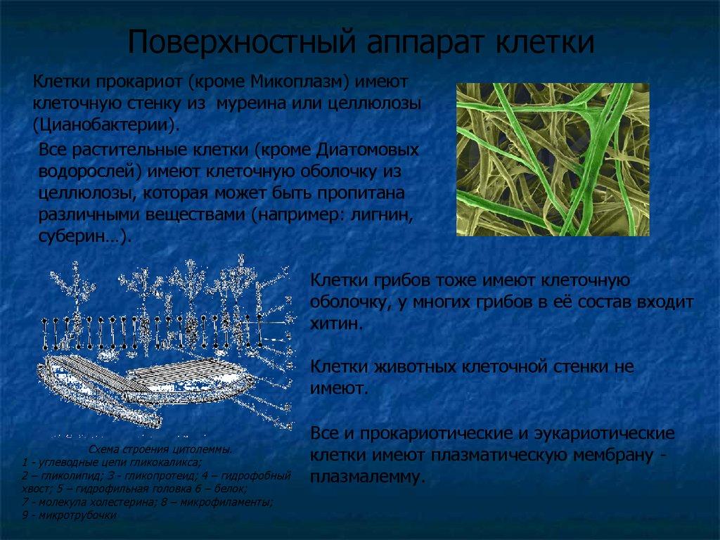 Гистология книга афанасьев pdf