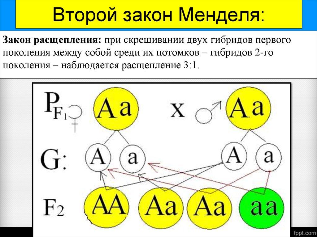 Как сделать русский язык 4 класс учебник каленчук чуракова