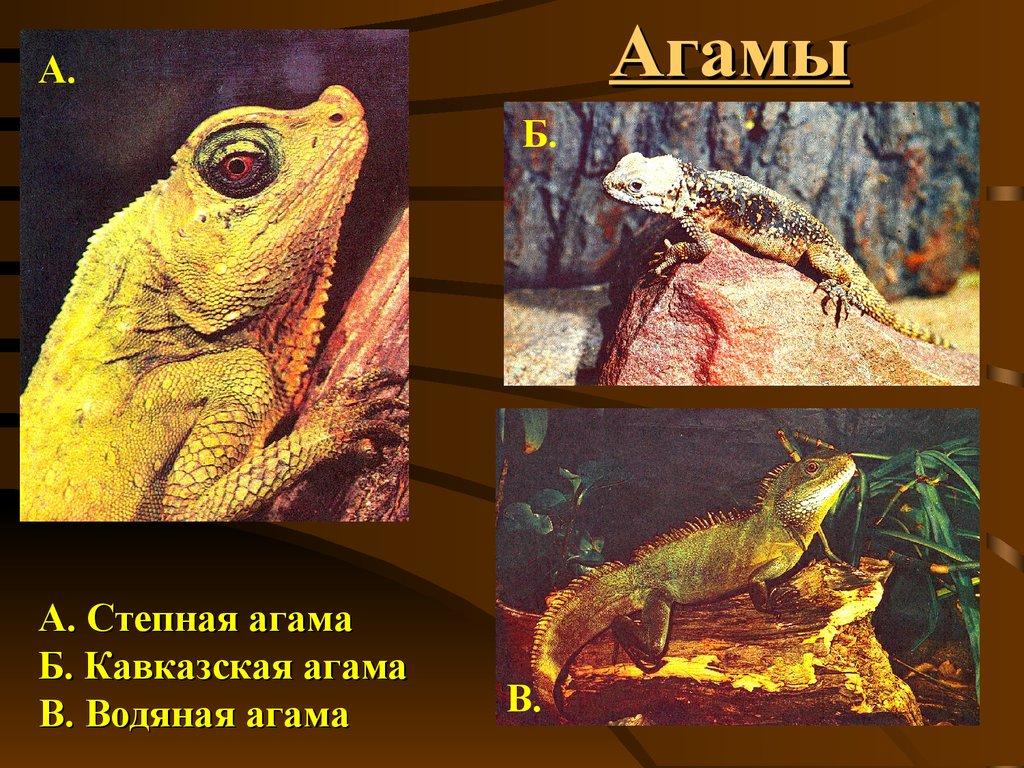 Класс пресмыкающиеся или рептилии 7 класс