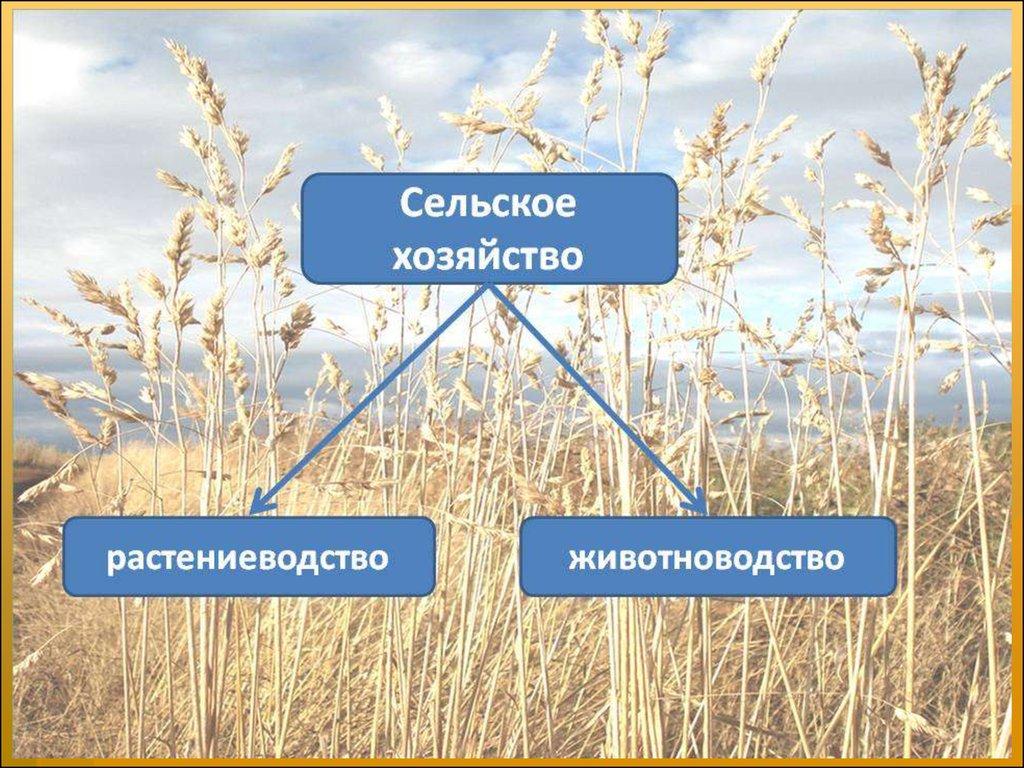 Европейская Часть России Презентация 9 Класс
