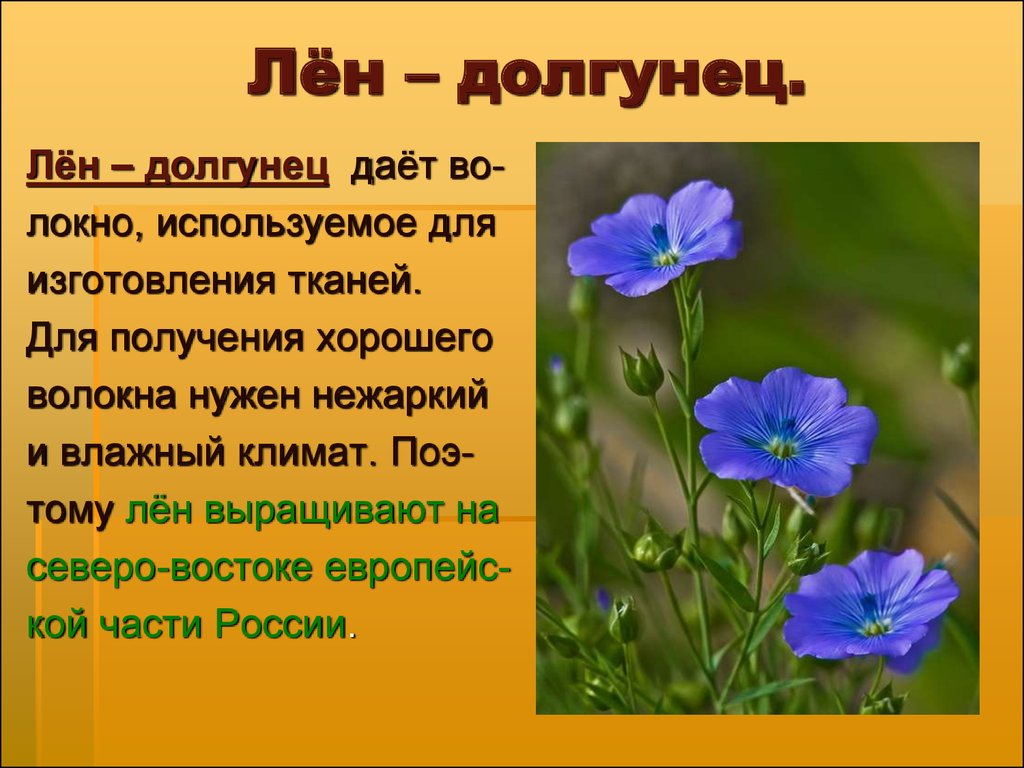 Особенности выращивания льна-долгунца 42