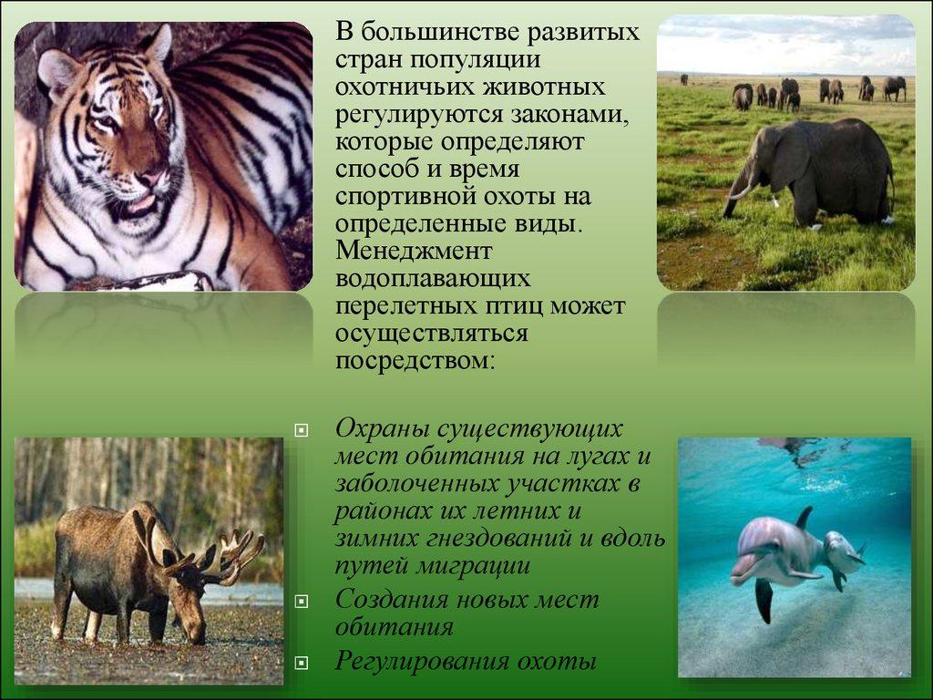 презентация миграции животных экология 7 класс