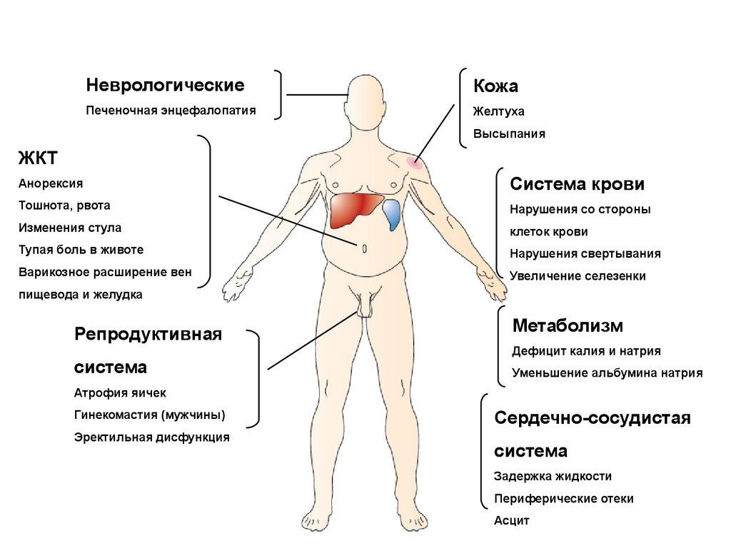 Заболевания печени у детей (часть 1)