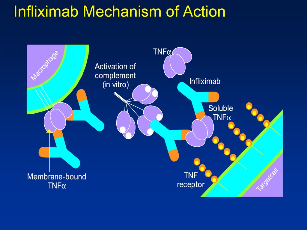 Inflammatory Bowel Diseases Online Presentation