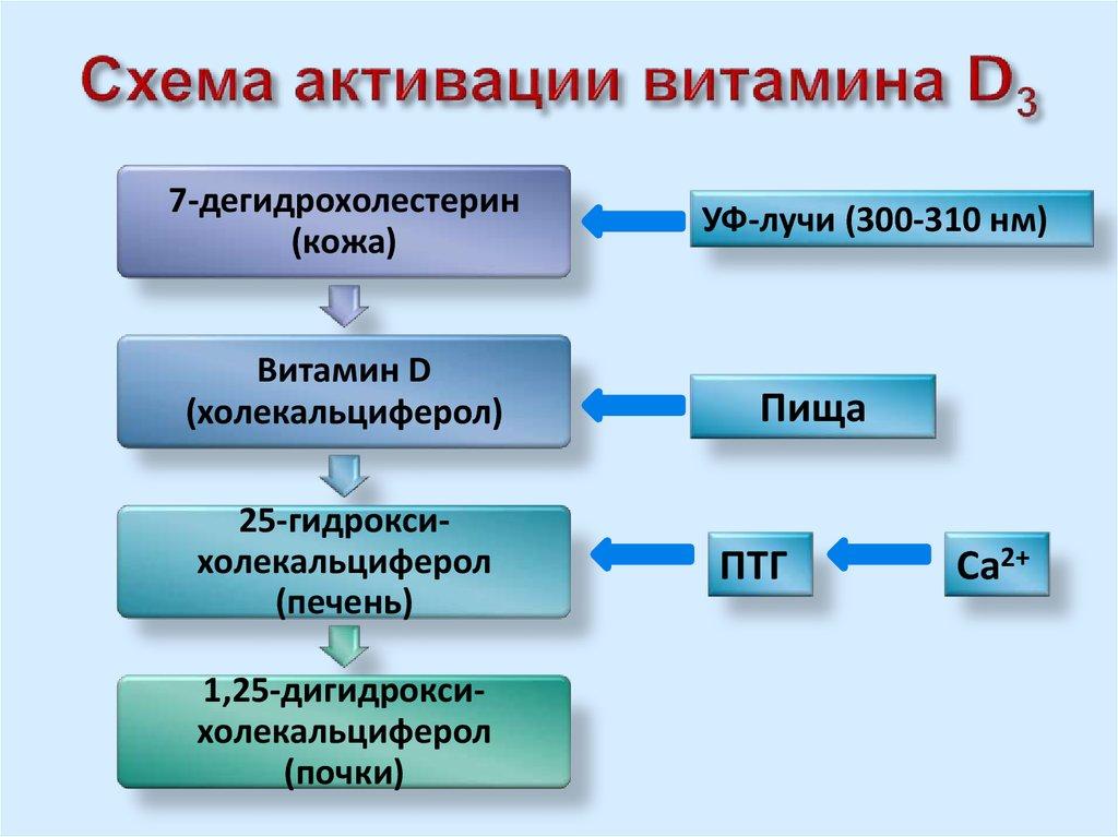 Углеводный обмен  Википедия