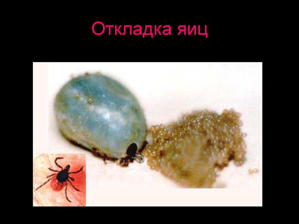 паразиты в человеке медикаментозное лечение