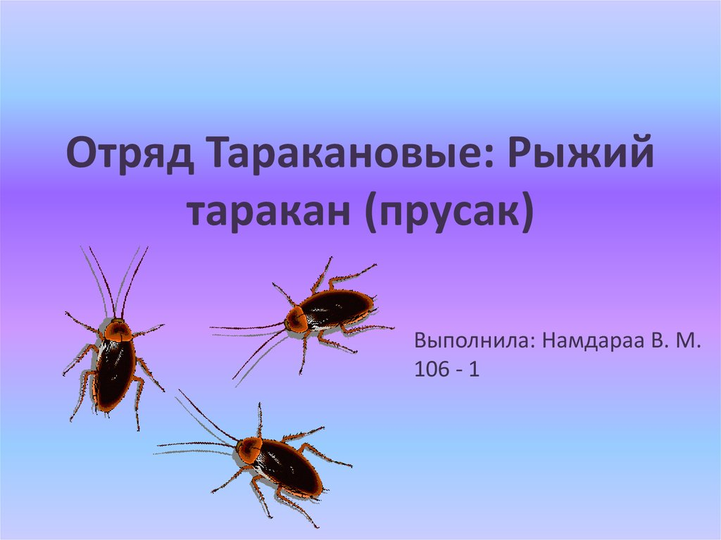 плоские черви паразиты человека примеры