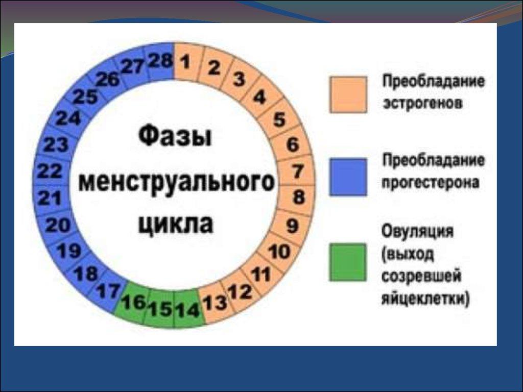 Менструальный цикл улучшается после силовых - Alex-andr.ru