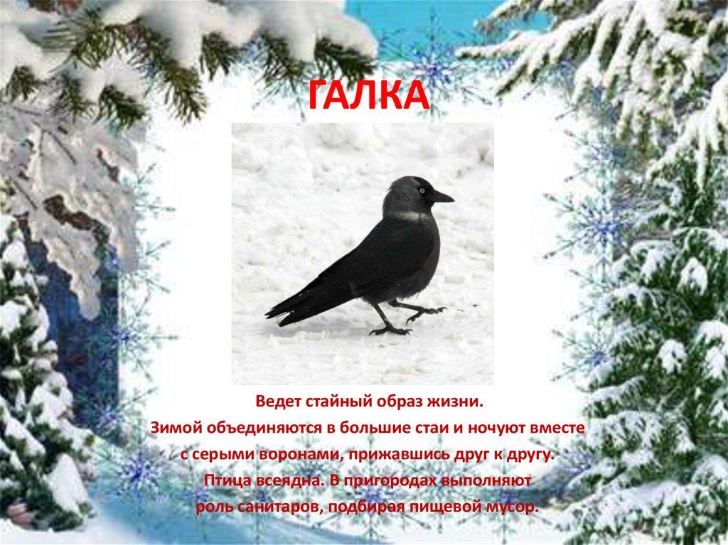 Птица галка, фото 2088979