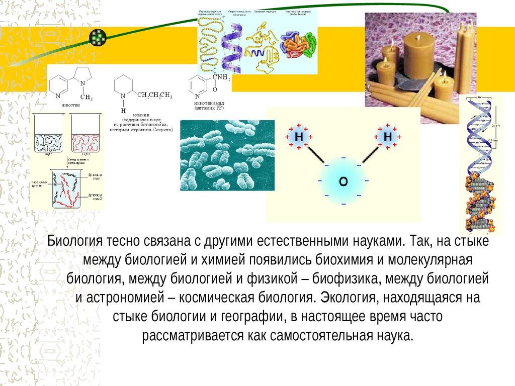 Биология и что с ней связанное