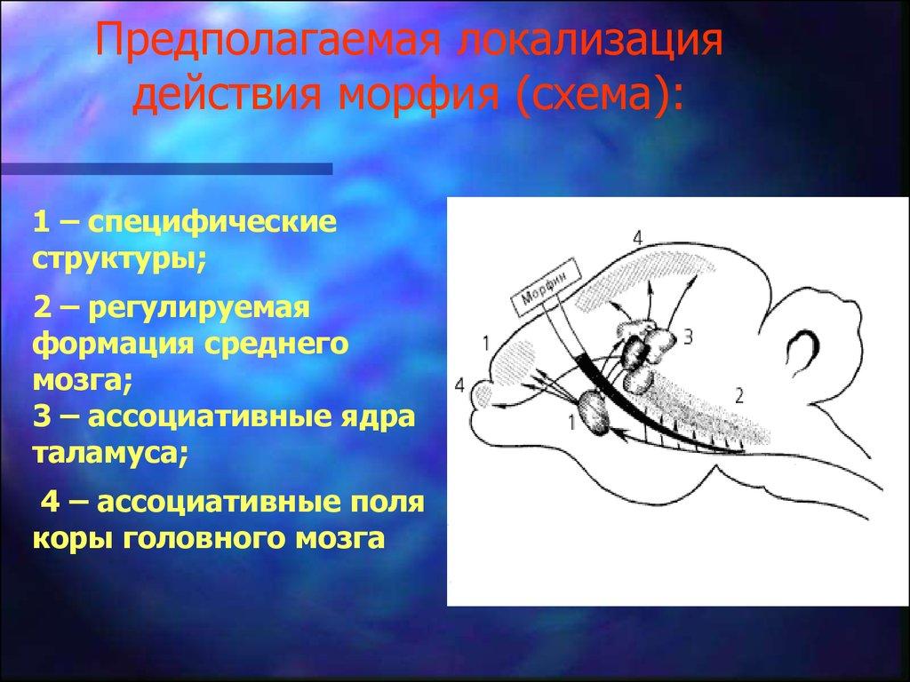 что такое ноотропные препараты противопоказания