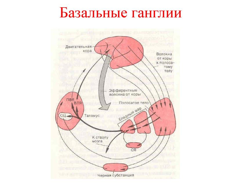 Тело Полосатое