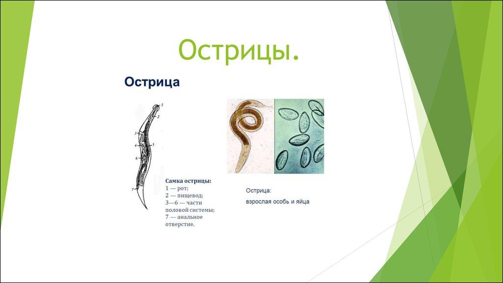 черви у человека похожие на спагетти