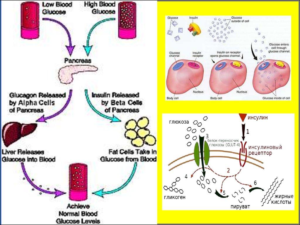 Сахарный диабет и Принципы лечения диабета по