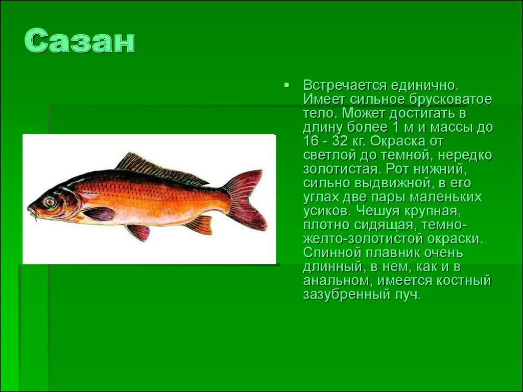 Животные и растения пермского края с картинками 2