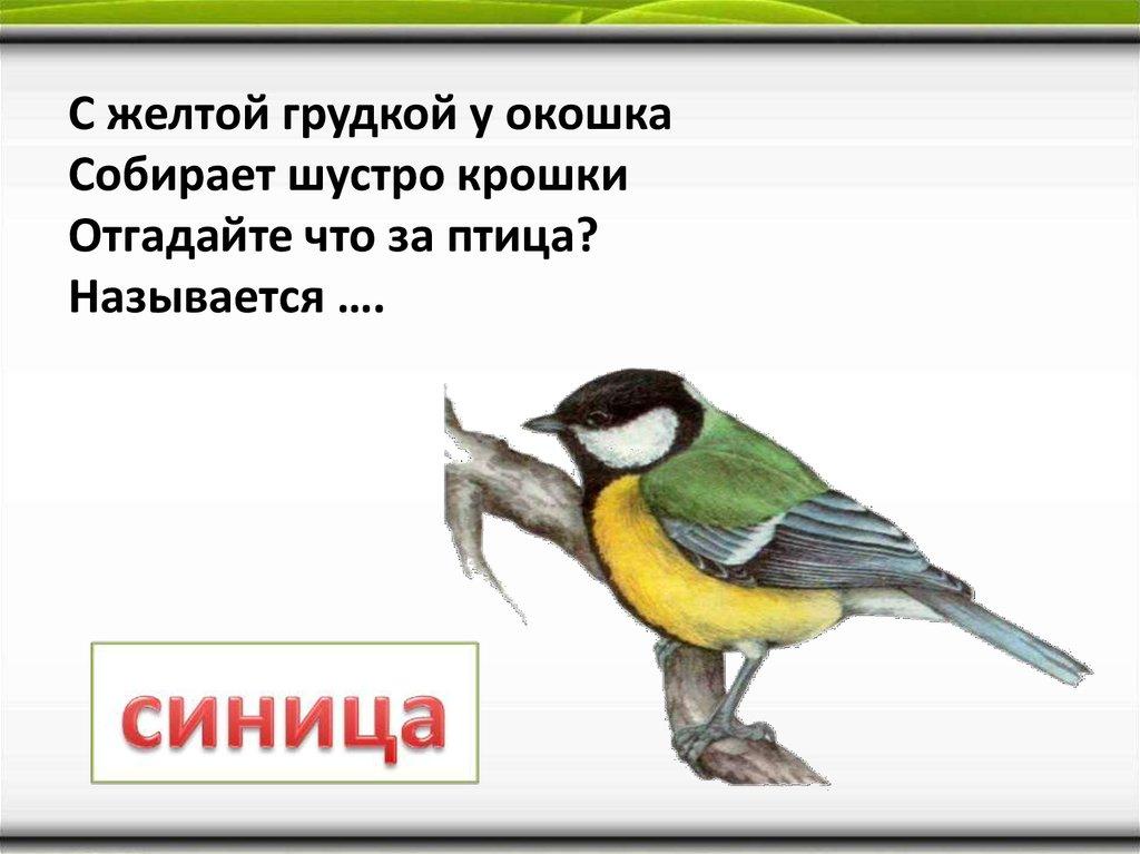 Москва купить зимний шарф на