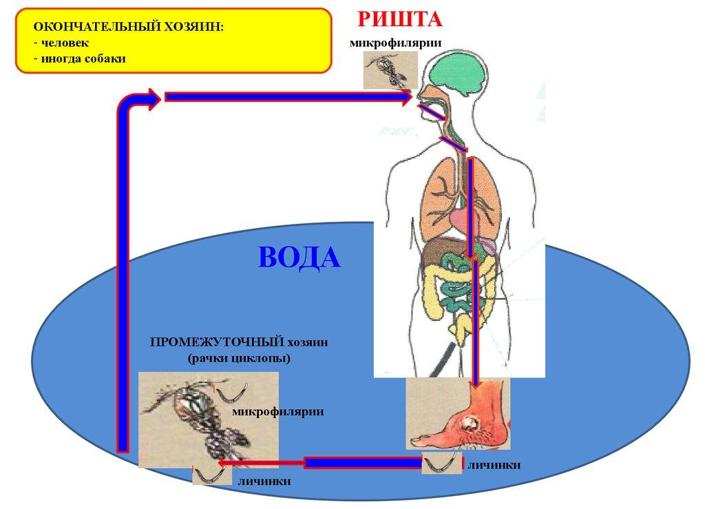 полезны паразиты человека