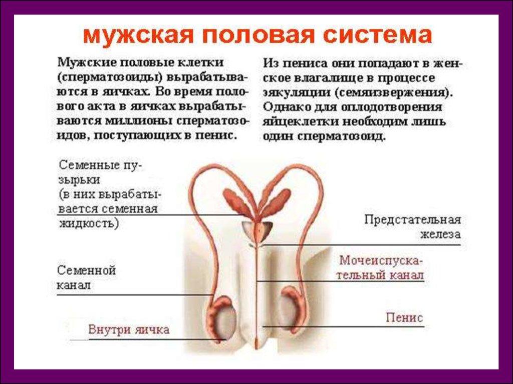 masturbatsiya-i-prodolzhitelnost-polovogo-akta