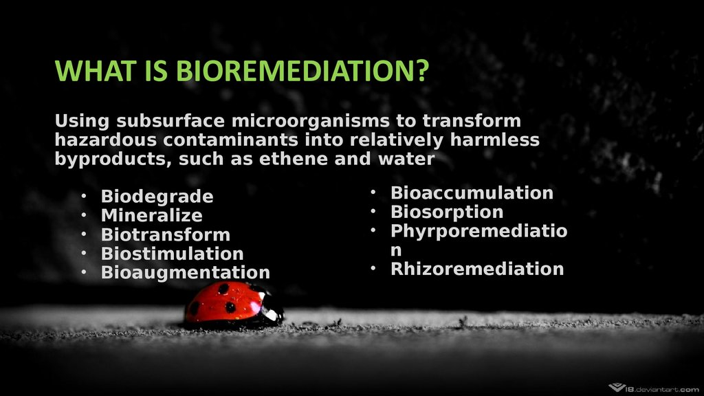 bioremediation technologies for ecology Although bioremediation appears to be a promising alternative for the remediation of pesticide-contaminated sites, it is still in the developmental phase it is a research-intensive technology because a large number of microorganisms and toxic compounds are involved in this process.