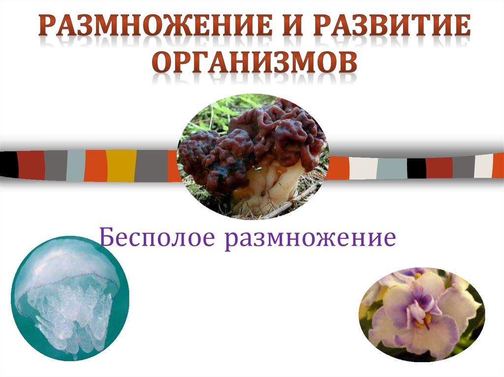 Размножение и развитие организмов