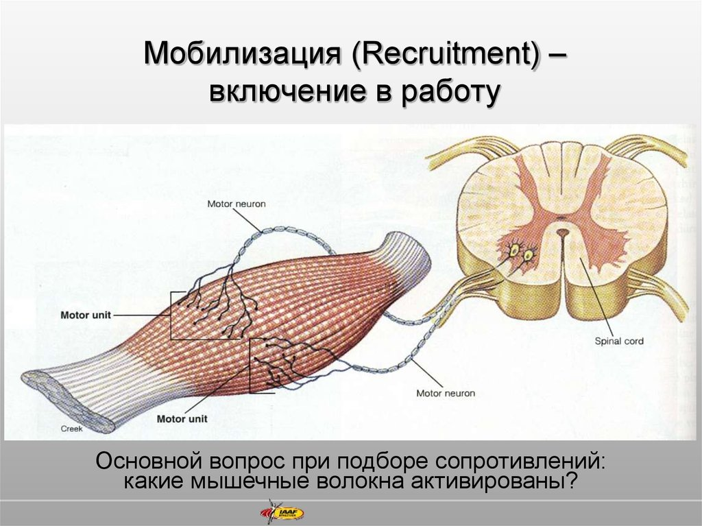 Мобилизация (Recruitment) – включение в работу