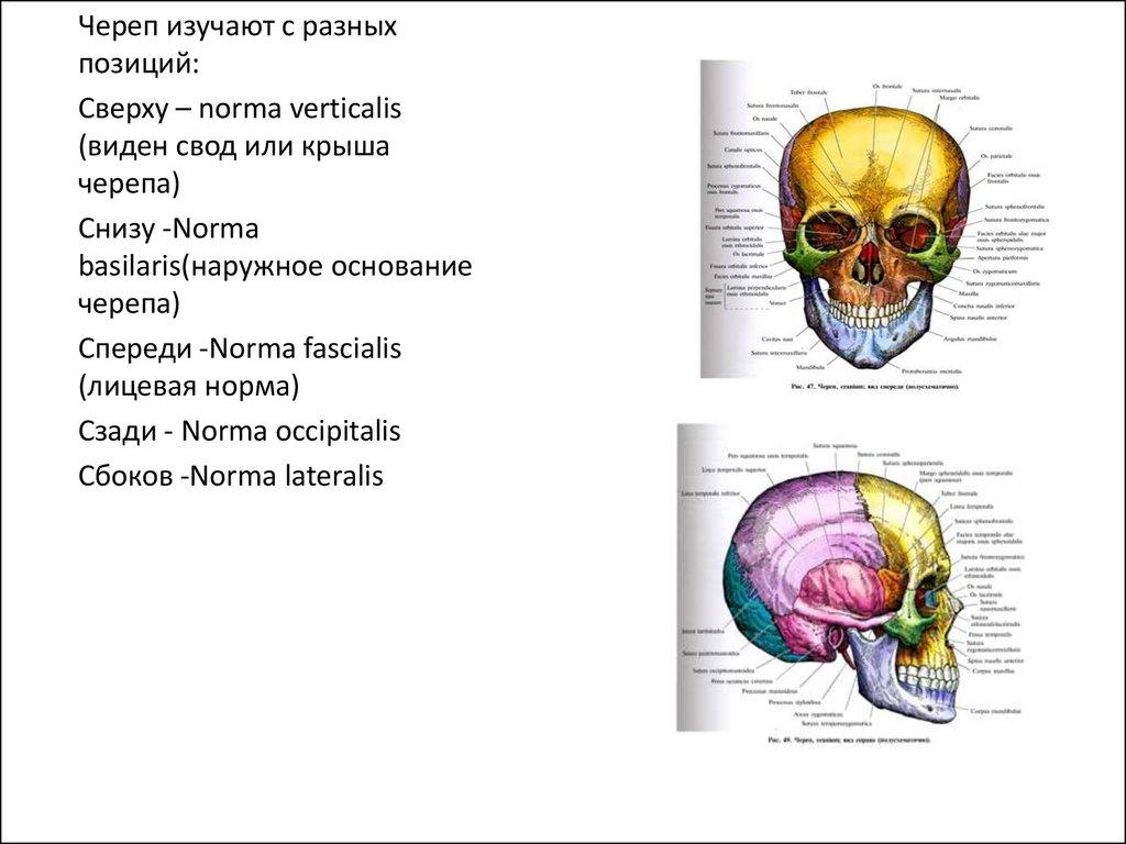 pdf Hank
