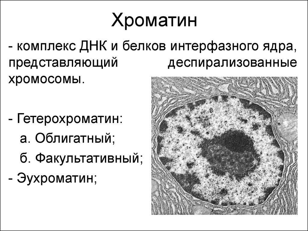 Эухроматин