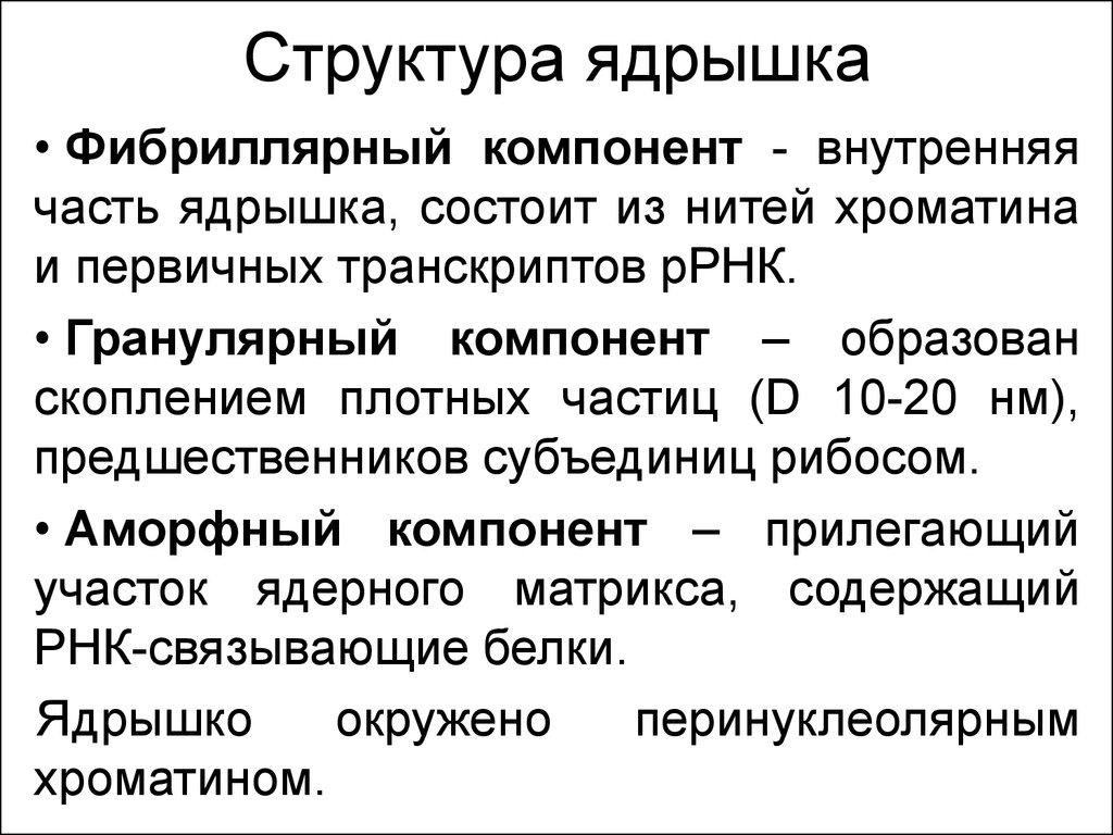 Ядрышко