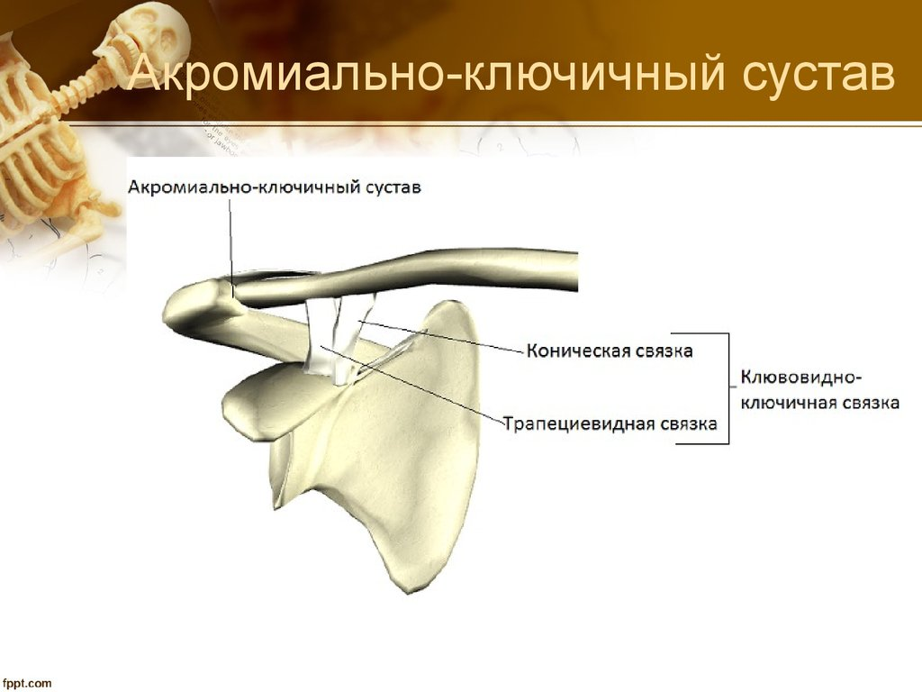 повреждение связочного аппарата правого плечевого сустава