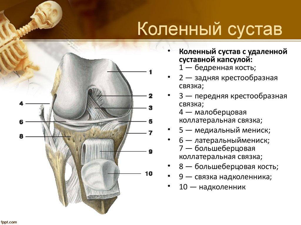 переводы сустав