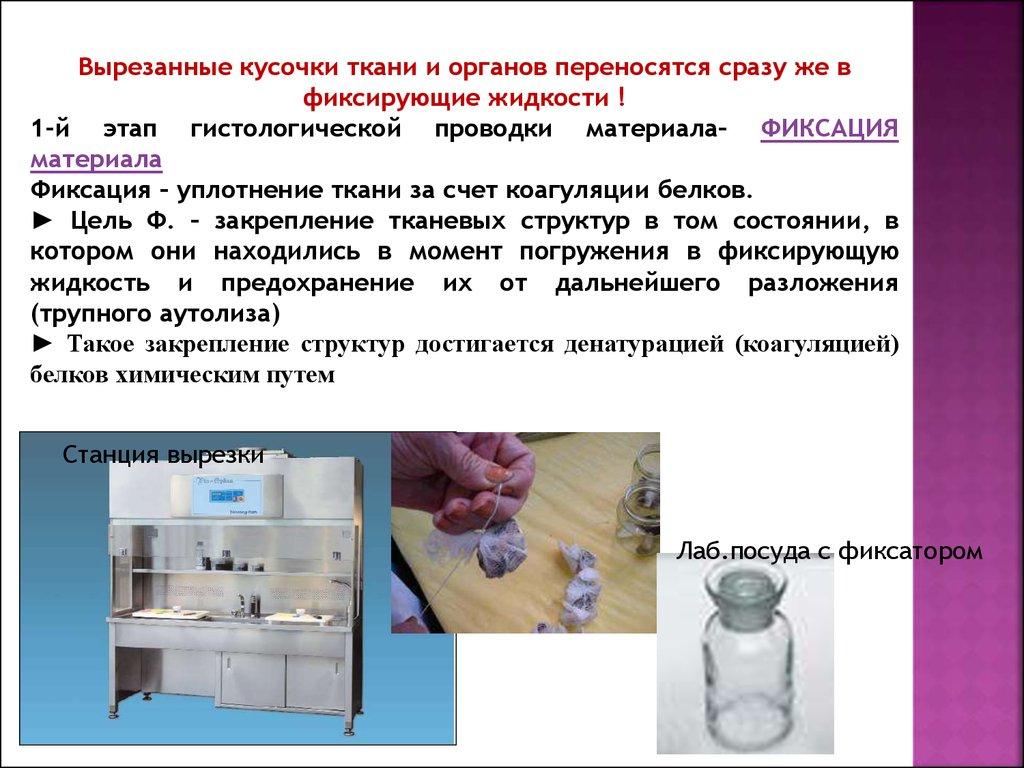 фото эмбриология