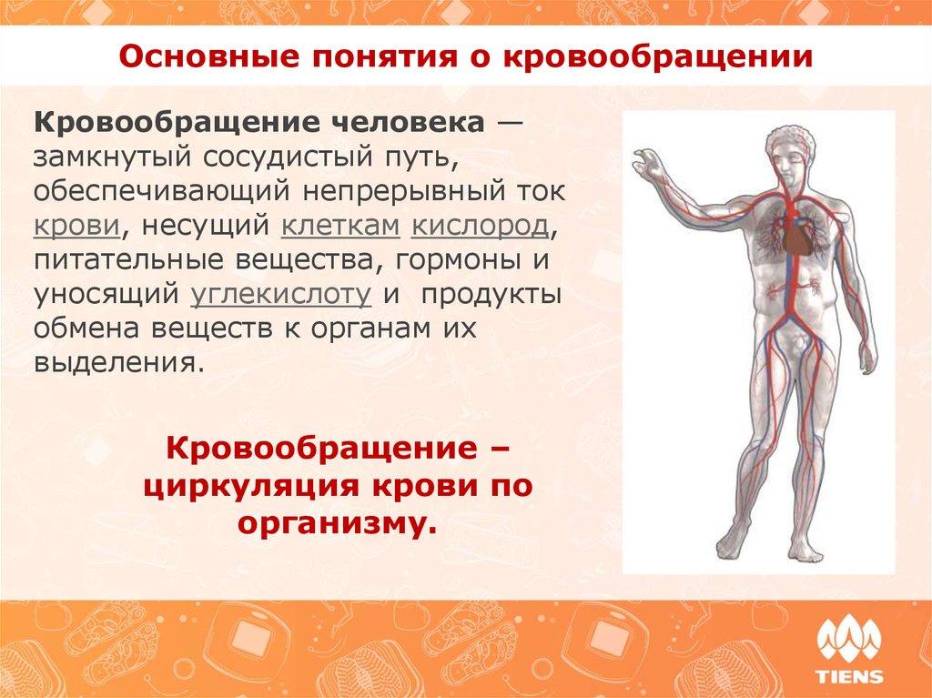 медицинские препараты для улучшения потенции Александровск