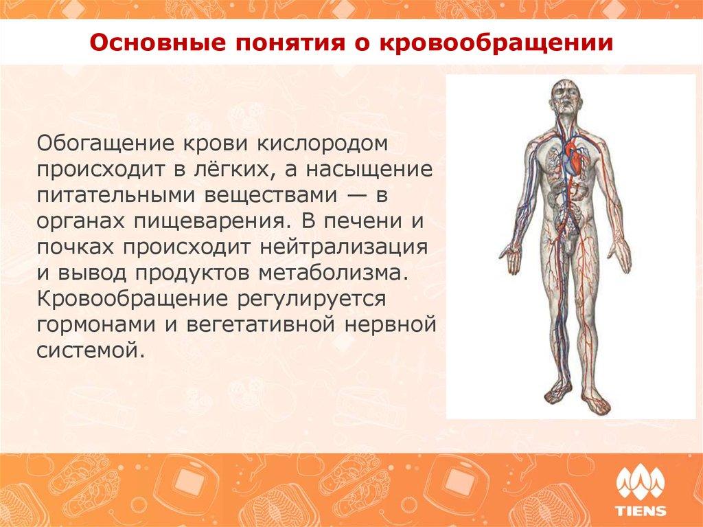 медицинские препараты для улучшения потенции Арск