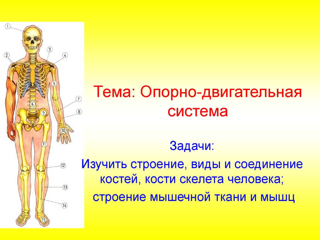 Нарушение вестибулярного аппарата человека и укачивание