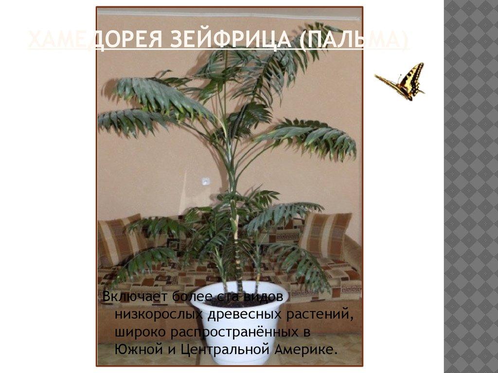 Топ15 полезных комнатных растений для дома с фото