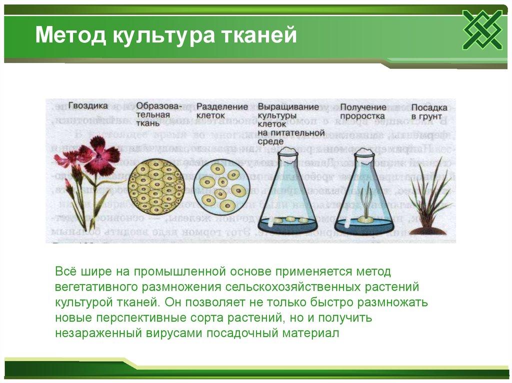 Выращивание тканей вне организма метод 64