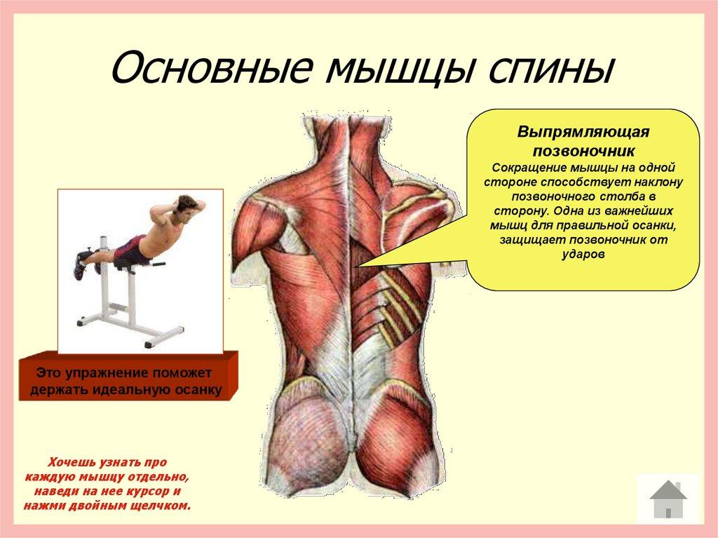 Как сделать мышцы на спине