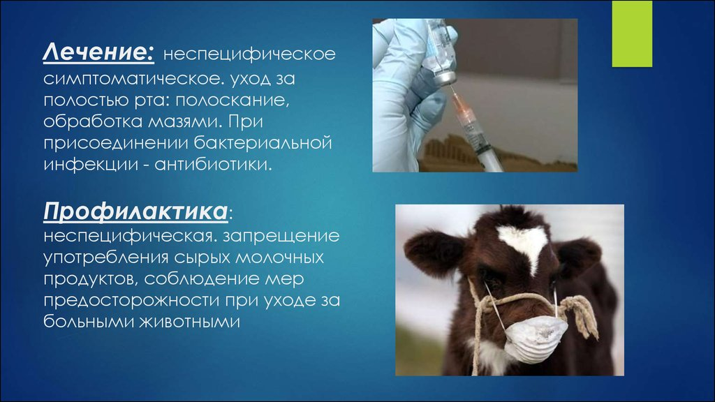 Острая вирусная зоонозная инфекция ящур - презентация онлайн