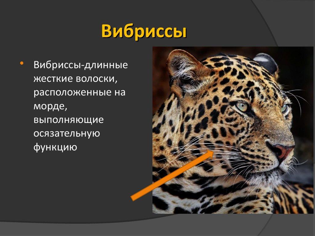 презентация на тему внешнее строение млекопитающих