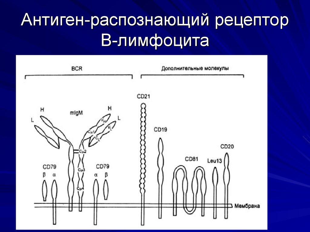 защита от паразитов человека